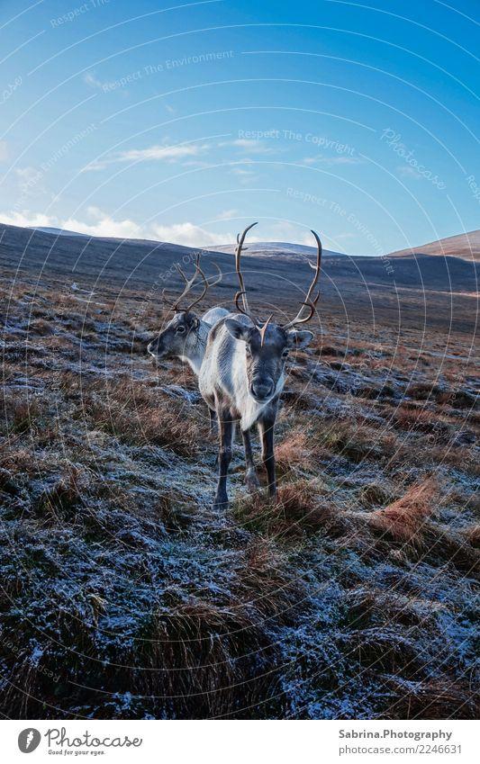 Have you met Rudolphs parents? Natur Landschaft Sonne Erholung Tier Winter Berge u. Gebirge Essen Herbst Wiese Schnee Gras außergewöhnlich wild träumen frei