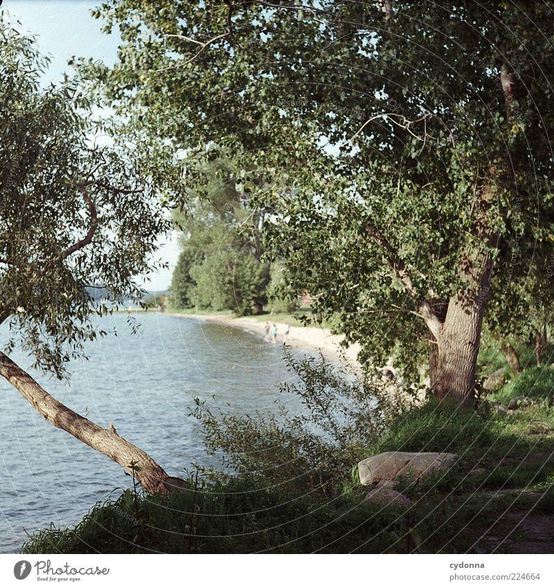 Am Seeufer Wohlgefühl Zufriedenheit ruhig Ferne Freiheit Umwelt Natur Landschaft Wasser Sommer Baum Strand Bewegung Freude Idylle Leben träumen Zeit analog