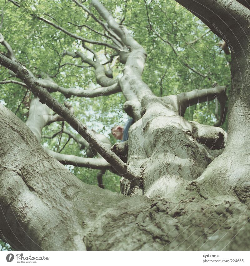 Baumversteck Mensch Natur Umwelt Leben oben Freiheit Bewegung Wege & Pfade träumen Freizeit & Hobby sitzen Lifestyle einzigartig Vergänglichkeit Ast