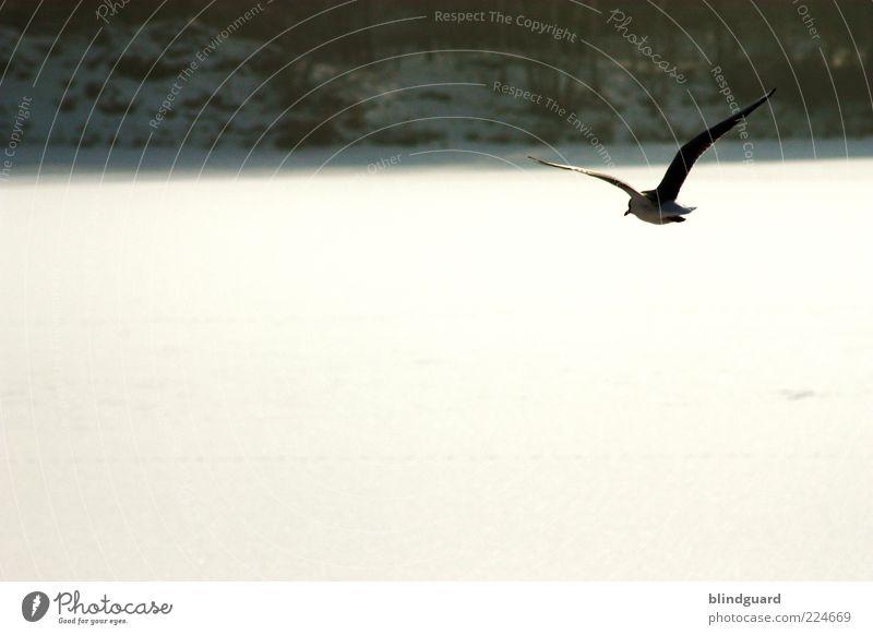 Vom Winter und Vögeln Natur Pflanze Tier Wetter Schönes Wetter Eis Frost Schnee Baum Sträucher Seeufer Wildtier Vogel Flügel 1 fliegen frieren frei
