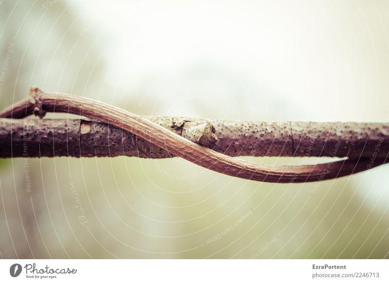 seid umschlungen Umwelt Natur Pflanze Herbst Klima Wetter Holz Zeichen dehydrieren Wachstum natürlich braun grün Kraft Sympathie Zusammensein Freundschaft