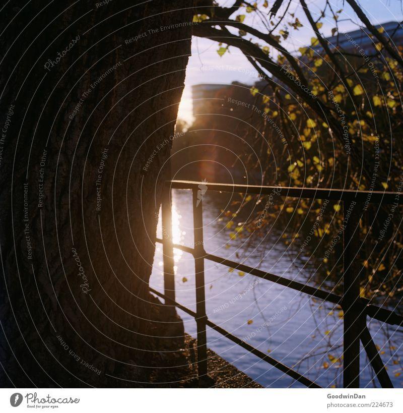 Licht. Umwelt Natur Urelemente Wasser Pflanze Baum Fluss authentisch einfach fantastisch hell viele Gefühle Stimmung Geländer Farbfoto Außenaufnahme