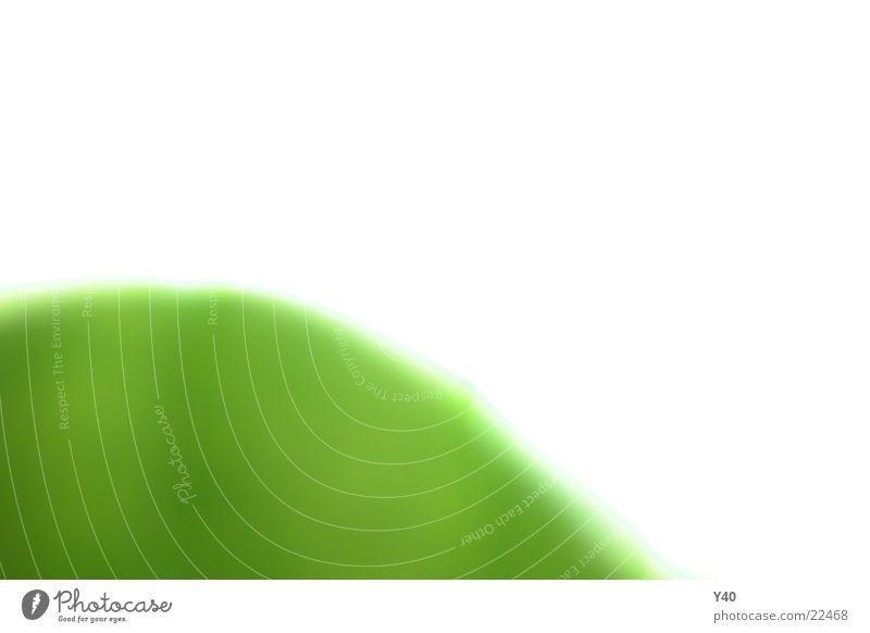 Grünes Blatt weiß grün Blatt