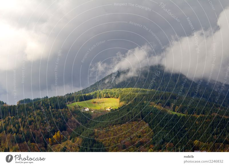 schwarzwaldgipfel Natur Ferien & Urlaub & Reisen grün Landschaft Sonne Baum Wolken ruhig Wald Berge u. Gebirge gelb Herbst Gras Tourismus braun orange