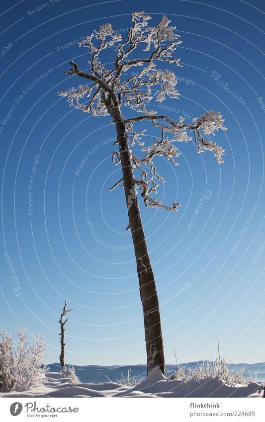 Winterzauber #3 Ferne Freiheit Sonne Schnee Winterurlaub Umwelt Natur Himmel Wolkenloser Himmel Sonnenlicht Baum Ast frieren schön Stimmung träumen Wunsch