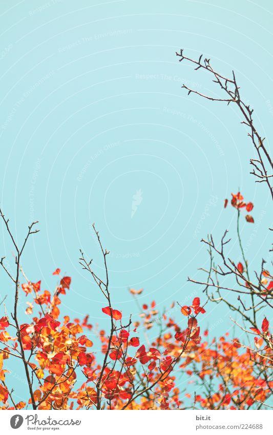 First-Bettwäsch-Kollektion 2011 Umwelt Natur Pflanze Luft Himmel Wolkenloser Himmel Herbst Blatt Wachstum blau gold rot Vergänglichkeit Herbstlaub herbstlich