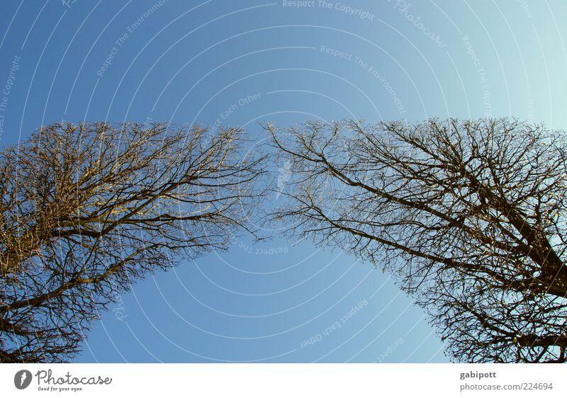 zusammen | wachsen (Vol.3) Himmel Natur blau Baum Pflanze Landschaft Garten Luft Park Linie Wachstum Schönes Wetter Tor Lebensfreude aufwärts Symmetrie