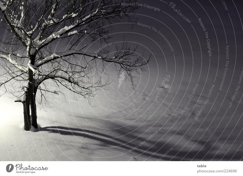 lonely Umwelt Natur Landschaft Pflanze Winter Eis Frost Schnee Baum Ulme Baumstamm Ast Zweige u. Äste frieren dunkel kalt klein grau schwarz weiß Gefühle
