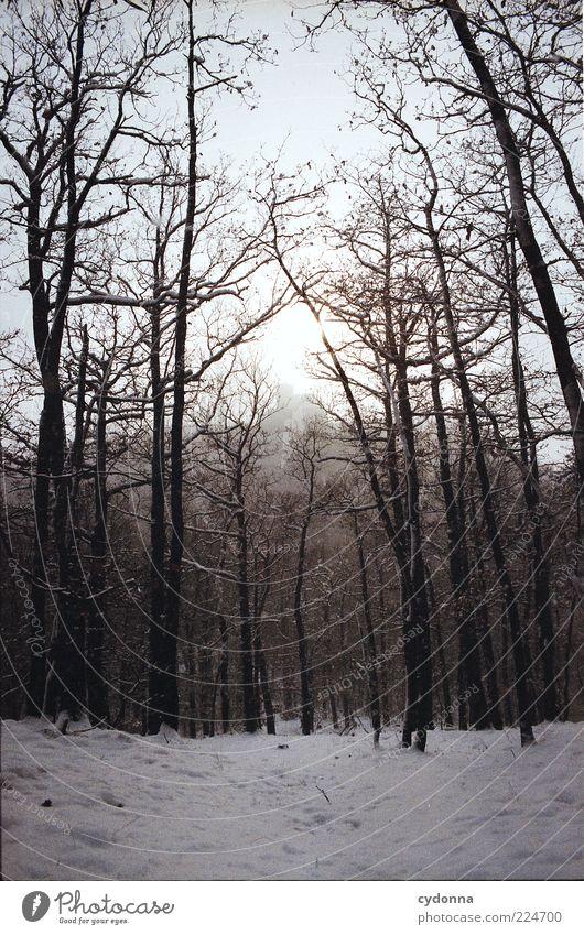 Winterwald Natur Baum ruhig Wald Leben Erholung Schnee Freiheit Landschaft Umwelt Wege & Pfade Zeit geheimnisvoll kahl stagnierend