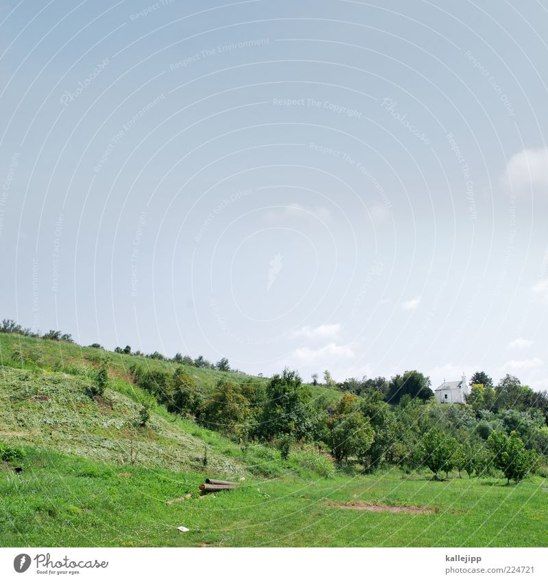 green day Himmel Natur grün Baum Sonne Sommer Wiese Landschaft Gras Klima Kirche Sträucher Hügel Landwirtschaft Schönes Wetter Blauer Himmel
