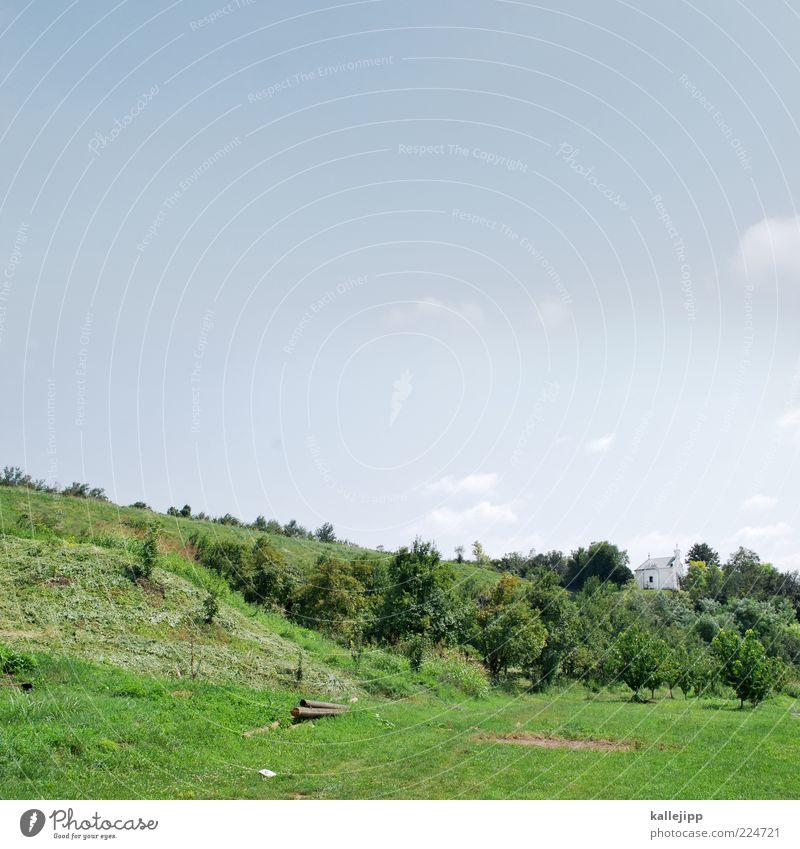 green day Natur Landschaft Himmel Wolkenloser Himmel Sonne Sommer Klima Schönes Wetter Baum Gras Sträucher Wiese Hügel Kirche grün Serbien griechisch-orthodox
