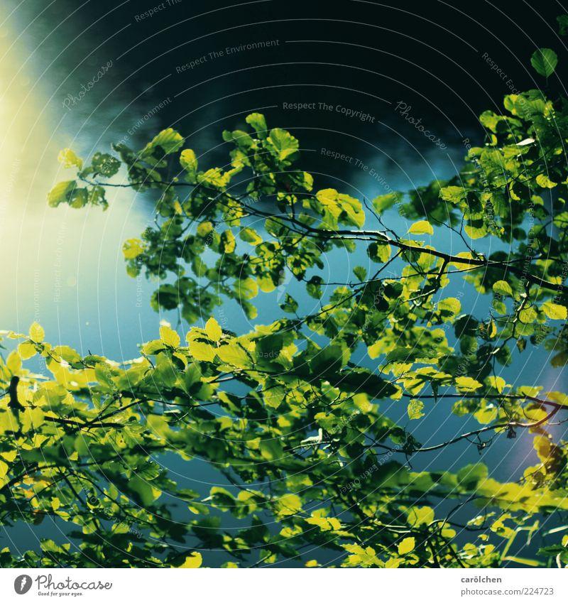 am See Natur grün Baum blau Pflanze Blatt dunkel Lampe See frisch Sträucher Seeufer Gewässer Buche Zweige u. Äste Wasseroberfläche