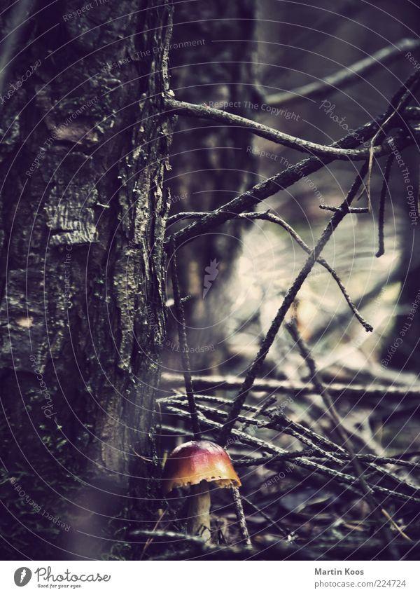 Im Wald Natur Pflanze Pilz dunkel frisch giftpilz Gift Märchenwald gruselig Unterholz Baum Zweige u. Äste unwegsam Schutz Farbfoto Gedeckte Farben Pilzhut