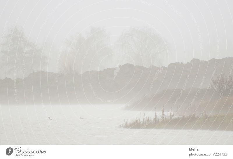 Ufer Umwelt Natur Landschaft Urelemente Wasser Klima schlechtes Wetter Nebel Baum Seeufer Teich natürlich trist grau Stimmung Endzeitstimmung Idylle ruhig