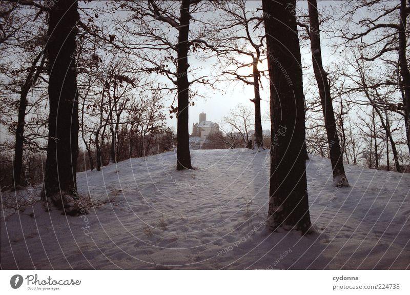 Wartburgblick Natur Baum ruhig Winter Einsamkeit Ferne Wald Leben Erholung Schnee Landschaft Umwelt träumen Eis Zeit Frost