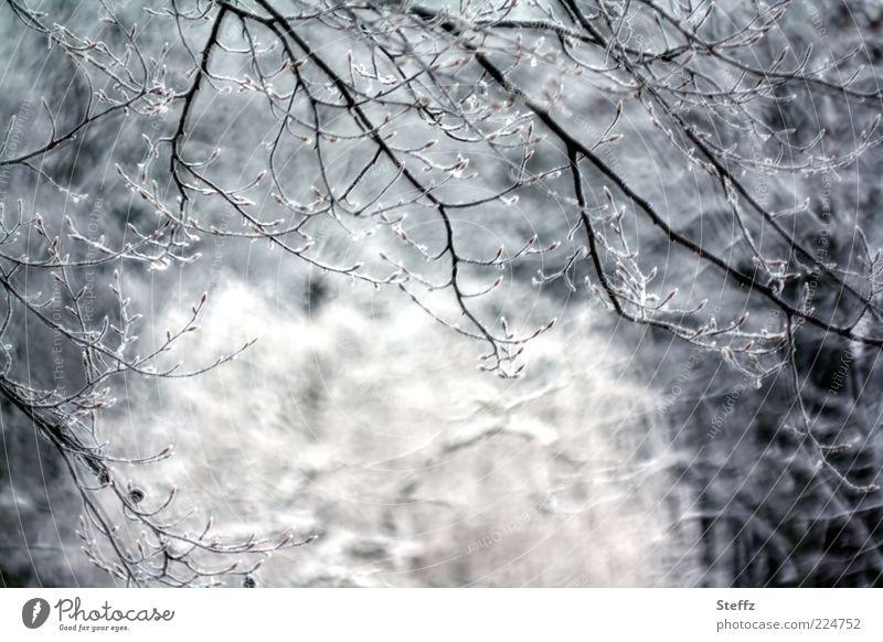 erzähl mir vom Winter Natur Baum ruhig Wald kalt Schnee grau Eis Frost gefroren frieren Zweige u. Äste Dezember Februar Januar