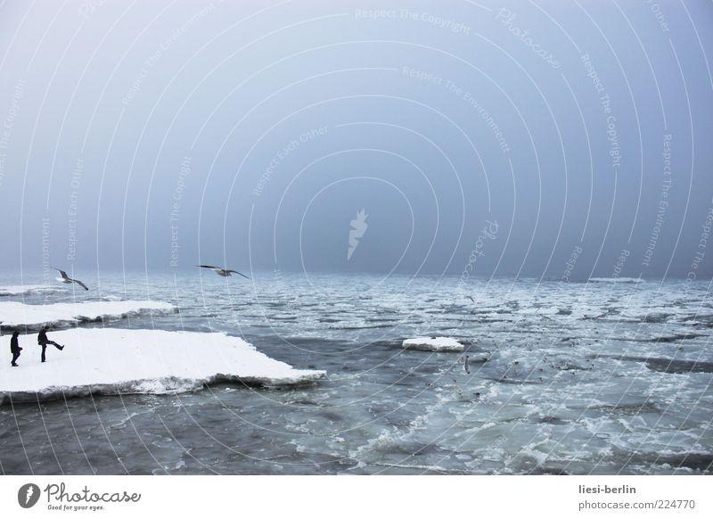 Ostseescholle Mensch Himmel Natur Wasser Strand Meer Winter Leben Schnee Landschaft Bewegung Küste Wellen Eis Frost Urelemente
