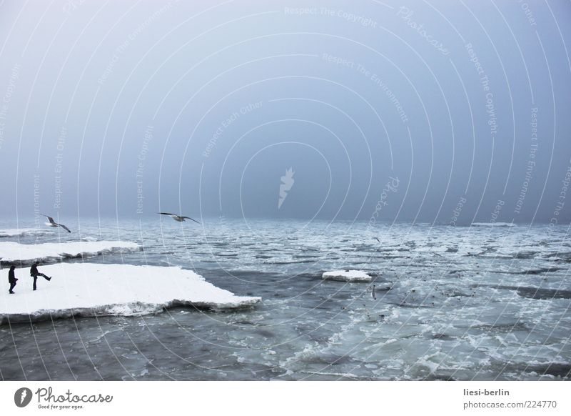 Ostseescholle Mensch Leben 2 Natur Landschaft Urelemente Wasser Himmel Winter Eis Frost Schnee Wellen Küste Strand Bucht Meer Bewegung Möwe Farbfoto