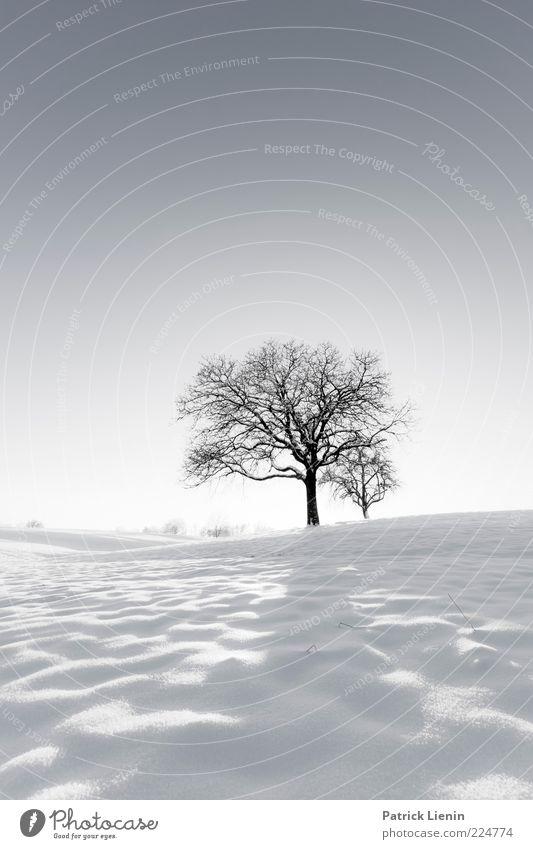 White Winter Hymnal Himmel Natur weiß Baum schön Pflanze Winter Einsamkeit kalt Schnee Landschaft Umwelt Luft hell Wetter Eis