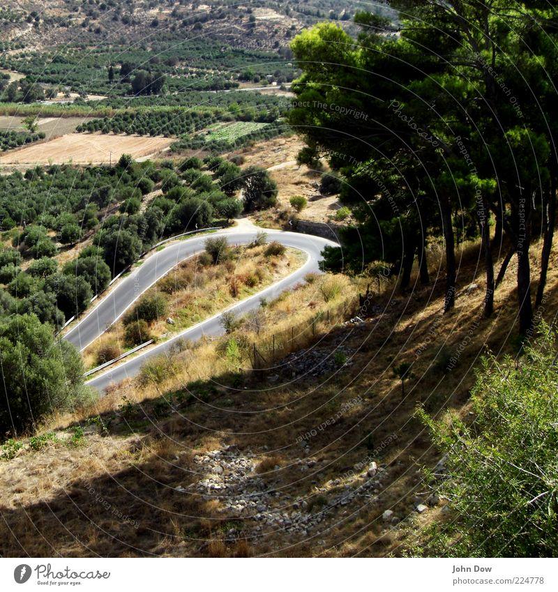 Phaistos Baum Pflanze Sommer Ferien & Urlaub & Reisen Ferne Straße Gras Feld Ausflug Sträucher Aussicht Verkehrswege eng Schönes Wetter Kurve Fernweh