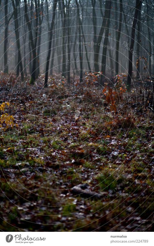 finster Märchenwald Umwelt Natur Pflanze Herbst schlechtes Wetter Nebel Baum Wald dunkel natürlich trist Gefühle ruhig Wandel & Veränderung Blatt