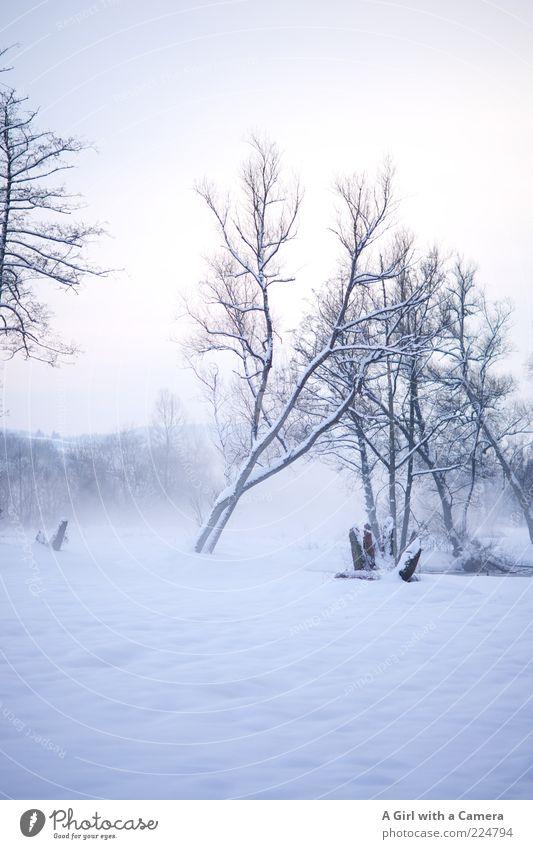 Eisige Nebel Umwelt Natur Landschaft Winter Schnee Baum Flussufer kalt natürlich schön weiß kahl bedeckt Schneelandschaft Menschenleer Textfreiraum oben