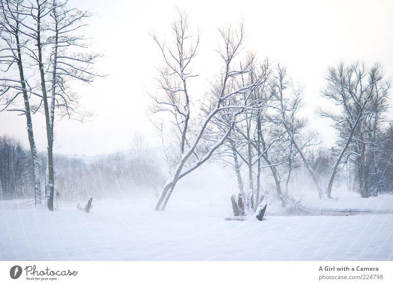 Nebelige Kälte Umwelt Natur Landschaft Wolken Winter Eis Frost Schnee Baum Flussufer ästhetisch authentisch frei gigantisch hell kalt natürlich wild weiß kahl