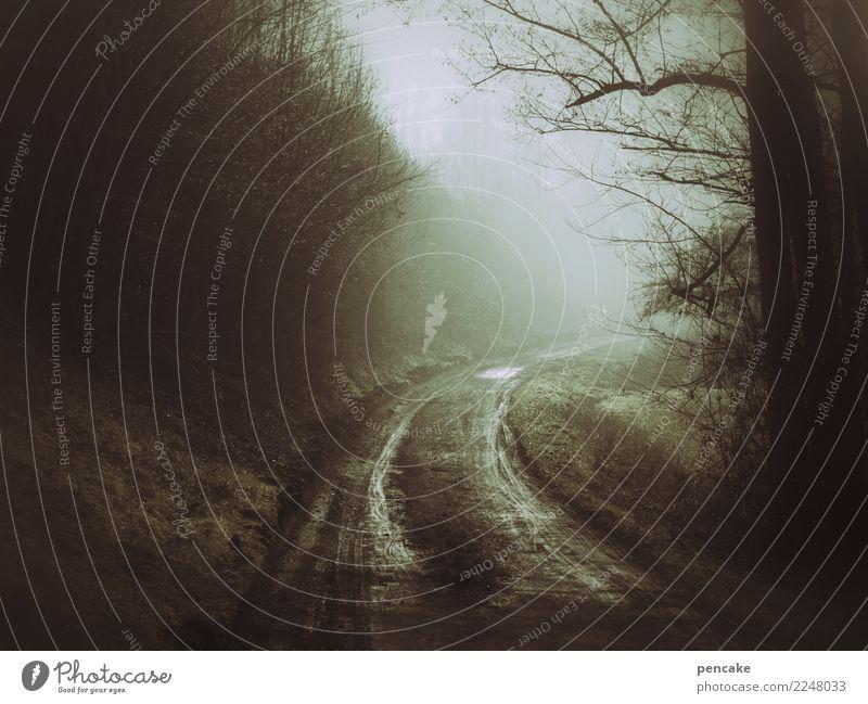 abgefahren Natur Landschaft Urelemente Erde Winter Nebel Baum Wald Wege & Pfade authentisch dunkel Reifenspuren nass Pfütze Dunst Böschung Hohlweg geheimnisvoll