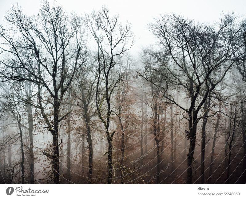 Back In The Woods [3] Ferien & Urlaub & Reisen Ausflug Abenteuer wandern Umwelt Natur Landschaft Pflanze Herbst Winter schlechtes Wetter Nebel Regen Baum Wald