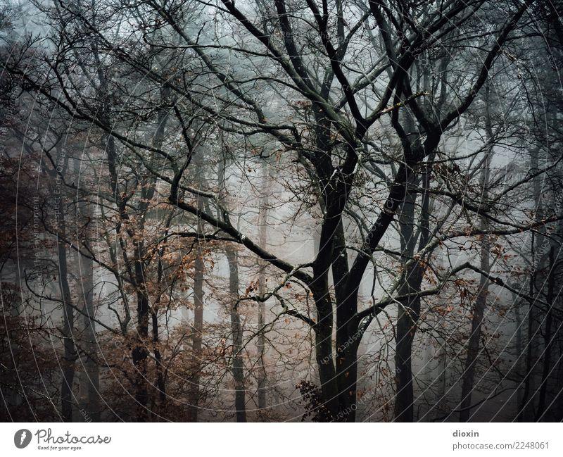 Back In The Woods [6] Ferien & Urlaub & Reisen Ausflug Abenteuer wandern Umwelt Natur Landschaft Pflanze Herbst Winter Wetter schlechtes Wetter Nebel Regen Baum