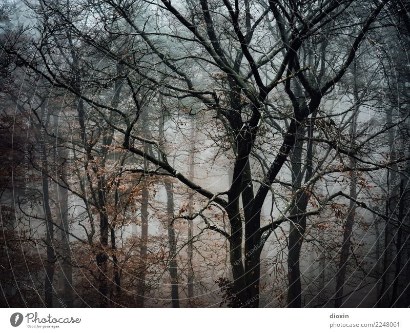 Back In The Woods [6] Natur Ferien & Urlaub & Reisen Pflanze Landschaft Baum Winter Wald Berge u. Gebirge Umwelt Herbst kalt natürlich Ausflug Regen wandern