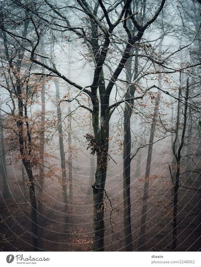 Back In The Woods [2] Ferien & Urlaub & Reisen Ausflug Abenteuer wandern Umwelt Natur Landschaft Pflanze Herbst Winter schlechtes Wetter Nebel Regen Baum Wald
