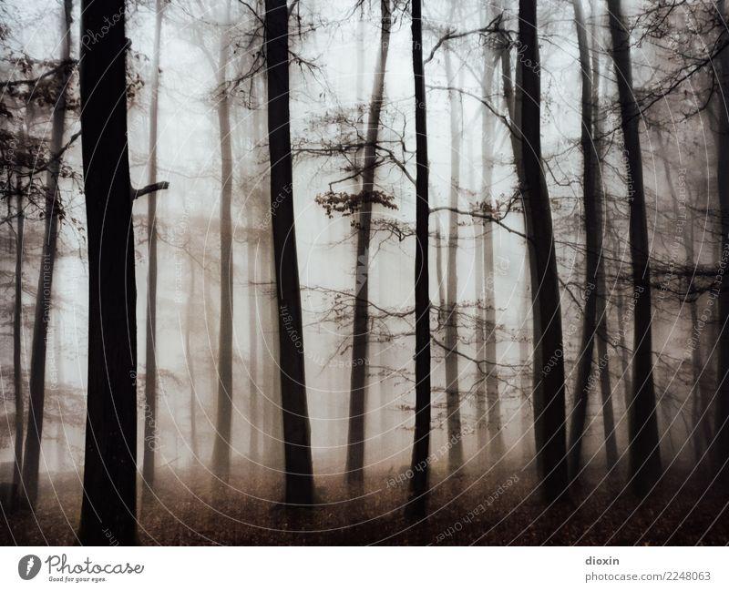 Back In The Woods [1] Ferien & Urlaub & Reisen Ausflug Abenteuer wandern Umwelt Natur Landschaft Pflanze Herbst Winter Wetter schlechtes Wetter Nebel Regen Wald