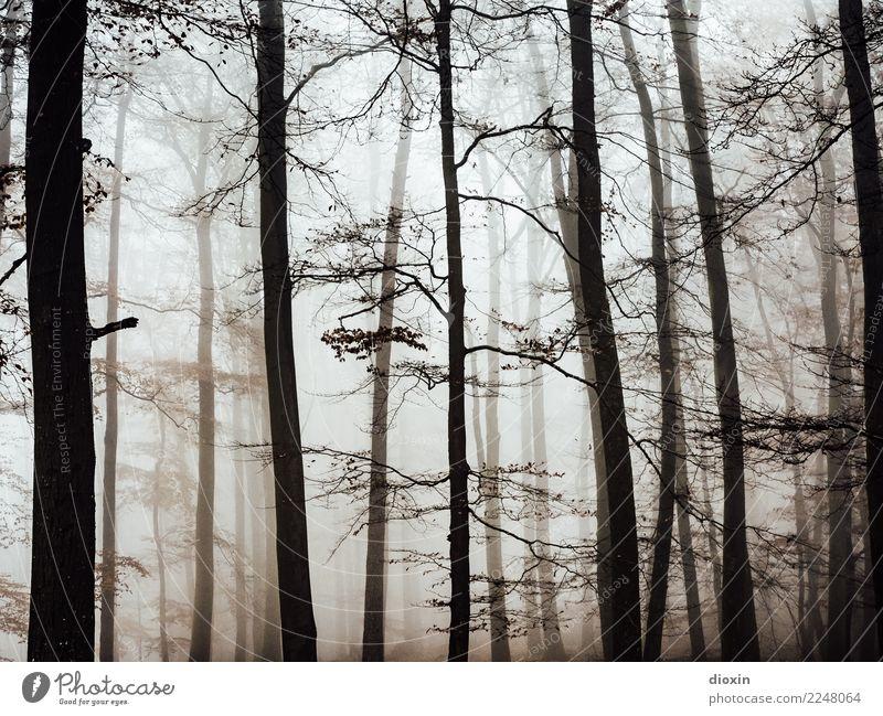 Back In The Woods [7] Ferien & Urlaub & Reisen Ausflug Abenteuer wandern Umwelt Natur Landschaft Pflanze Herbst Winter schlechtes Wetter Nebel Regen Baum