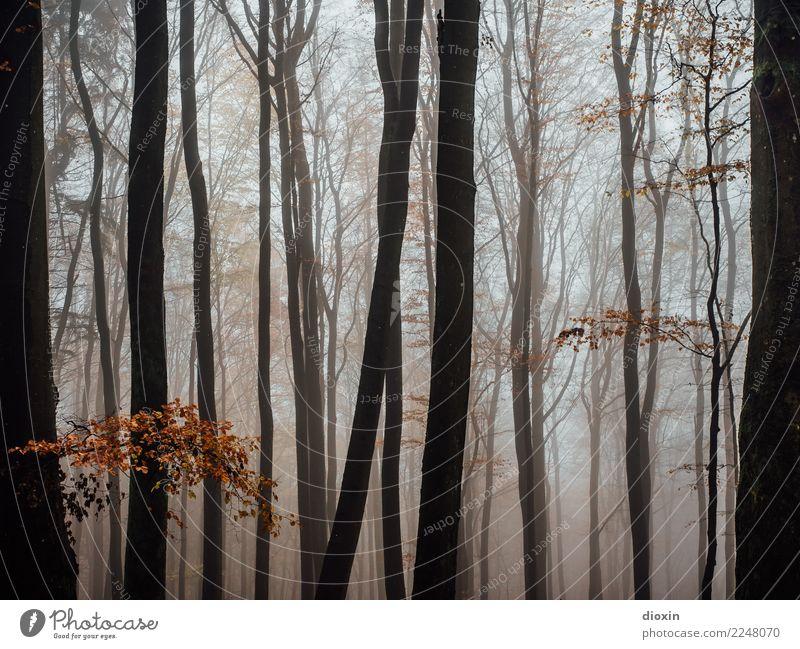 Back In The Woods [4] Ausflug wandern Umwelt Natur Landschaft Pflanze Herbst Winter Klima Wetter schlechtes Wetter Nebel Regen Baum Wald Berge u. Gebirge