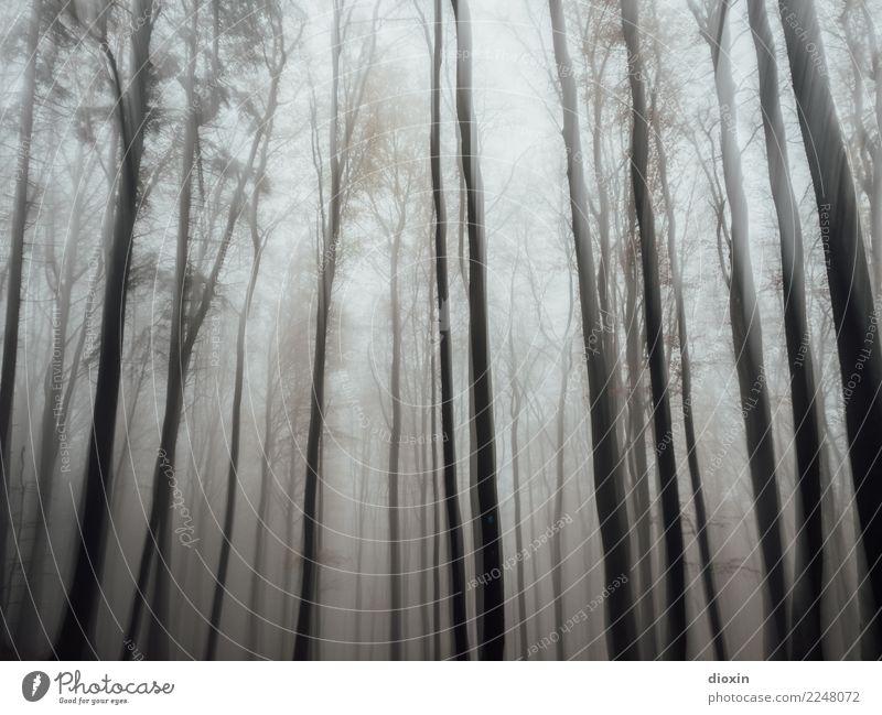 Back In The Woods [8] Ferien & Urlaub & Reisen Ausflug Abenteuer wandern Umwelt Natur Landschaft Pflanze Herbst Winter schlechtes Wetter Nebel Regen Baum Wald