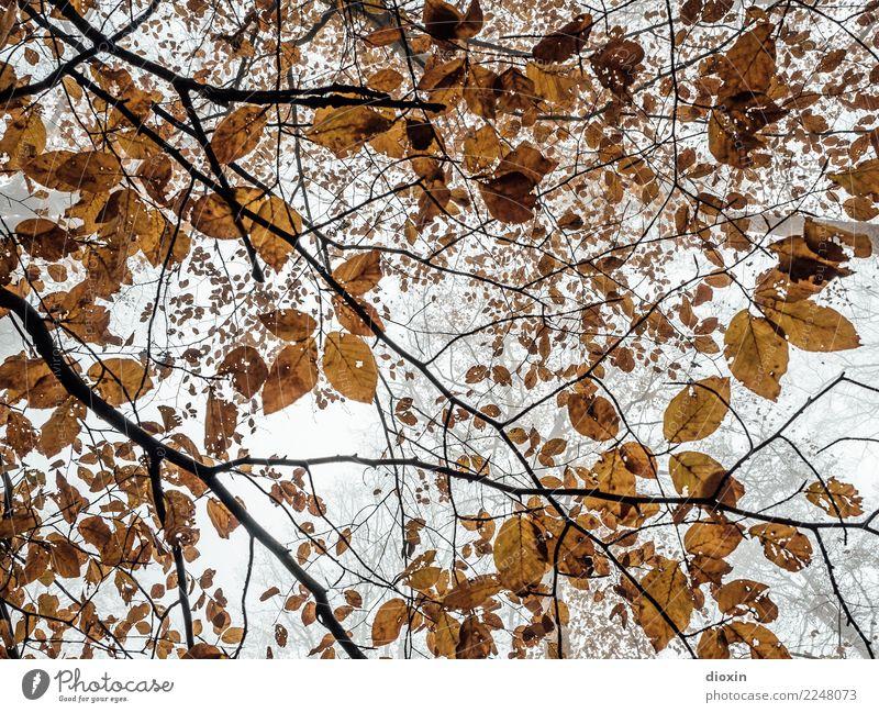 Laubwald Umwelt Natur Pflanze Himmel Herbst Klima Wetter schlechtes Wetter Baum Blatt Wildpflanze Wald Pfälzerwald Wachstum Farbfoto Gedeckte Farben