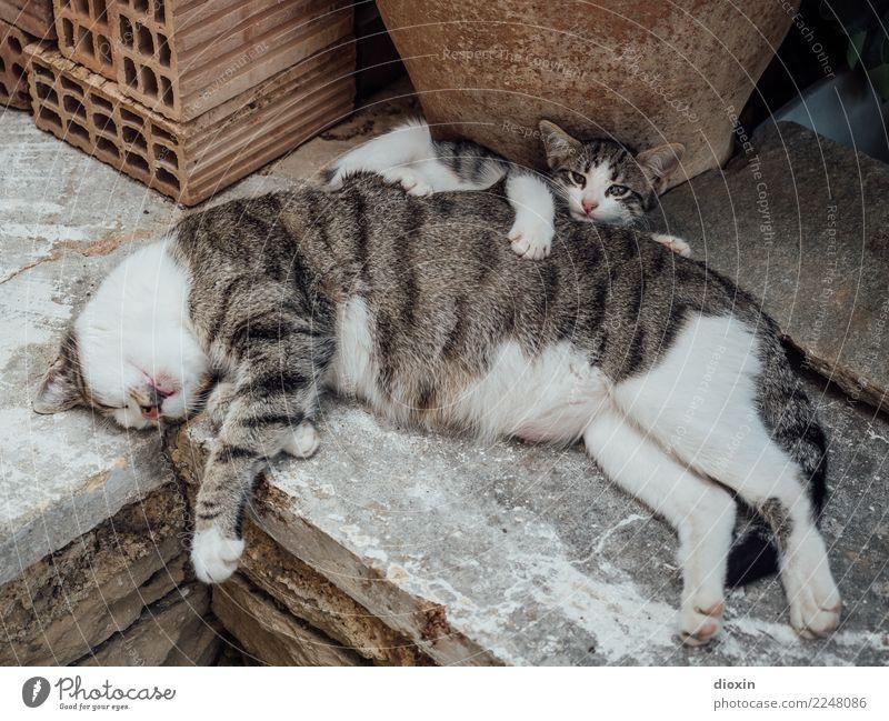 Mama ist die Beste! Tier Haustier Katze 2 Tierjunges Tierfamilie schlafen kuschlig natürlich niedlich Wärme weich Sicherheit Schutz Geborgenheit Gelassenheit