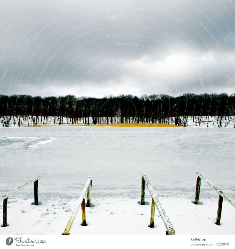 schlachtensee Ferien & Urlaub & Reisen Ausflug Ferne Winter Schnee Winterurlaub Umwelt Natur Landschaft Wasser Klima Eis Frost Seeufer Teich kalt Anlegestelle
