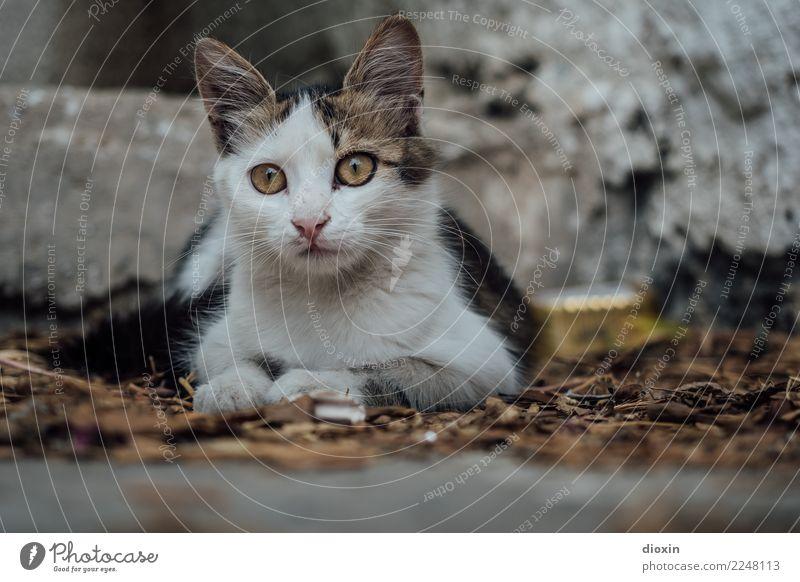 cats of crete Tier Haustier Katze 1 Tierjunges schön kuschlig niedlich achtsam Wachsamkeit Neugier Farbfoto Außenaufnahme Menschenleer Tag Schatten Unschärfe