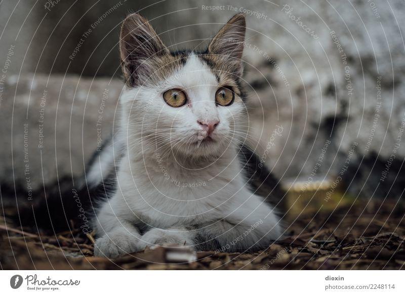 cats of crete Tier Haustier Katze 1 beobachten liegen Blick kuschlig klein Neugier niedlich Farbfoto Außenaufnahme Menschenleer Schwache Tiefenschärfe