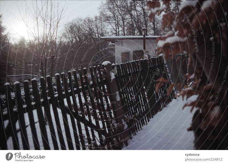 Winterschlaf Natur Eis Frost Schnee Garten Hütte Einsamkeit einzigartig geheimnisvoll ruhig stagnierend Wege & Pfade Zeit Gartenzaun Kleingartenkolonie