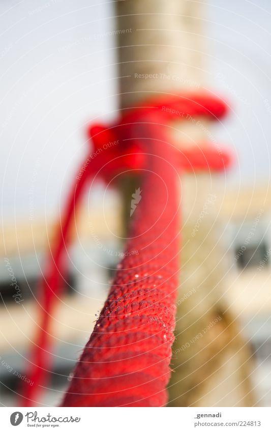 Weihnachtsschlitten Diebstahlsicherung Natur Baum rot ruhig Winter Einsamkeit Eis Seil Sicherheit Frost festhalten Baumstamm hängen Knoten knallig