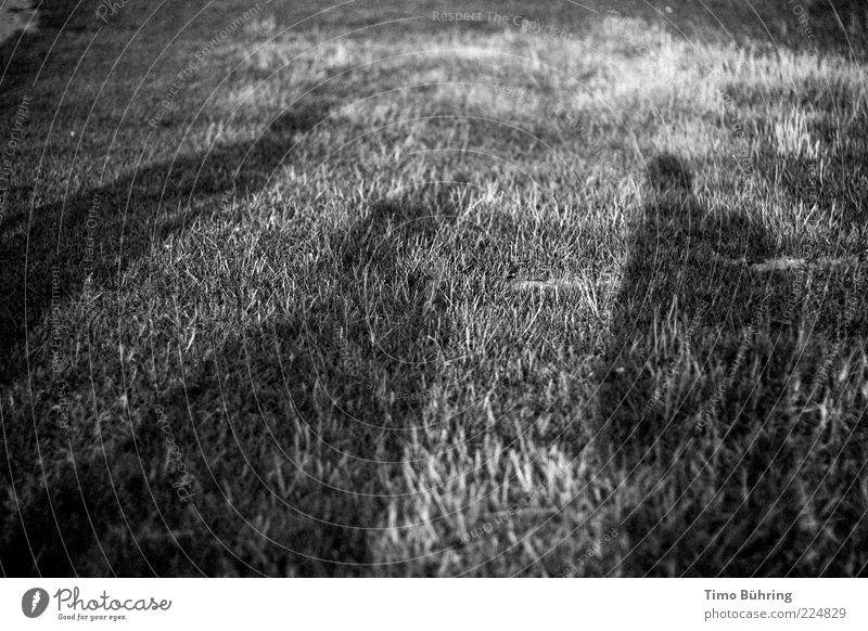 Schattenspiel Mensch Mann Natur Sommer Erwachsene Erholung Umwelt Wiese Gras Freundschaft Zusammensein maskulin Schönes Wetter genießen Schwarzweißfoto Schatten