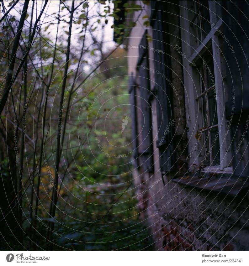 der Gärtner kam nicht. III Natur alt Pflanze Haus Wand Gras Garten Umwelt Mauer Gebäude Fassade kaputt trist Sträucher Verfall Hütte