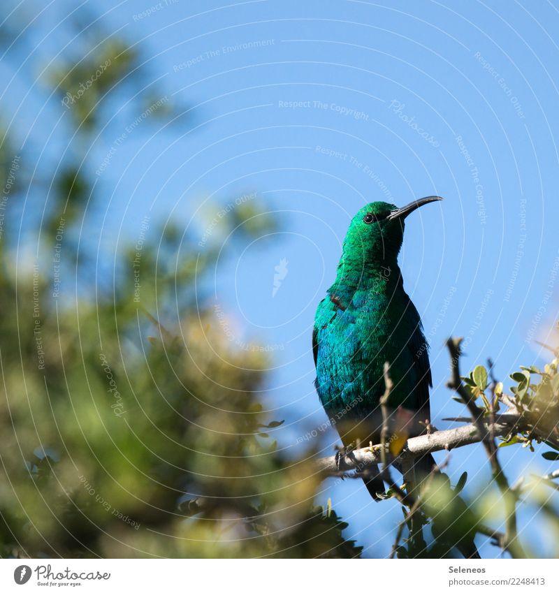 grün grün grün Natur Ferien & Urlaub & Reisen Sommer Sonne Baum Tier Ferne Umwelt natürlich Garten Tourismus Freiheit Vogel Park Wildtier Sommerurlaub