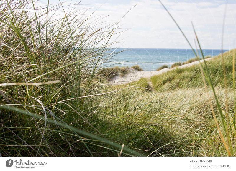 Durch die Düne Natur Ferien & Urlaub & Reisen Sommer grün Landschaft Sonne Meer Erholung Tier Strand Leben Umwelt Küste Gras Tourismus Zufriedenheit