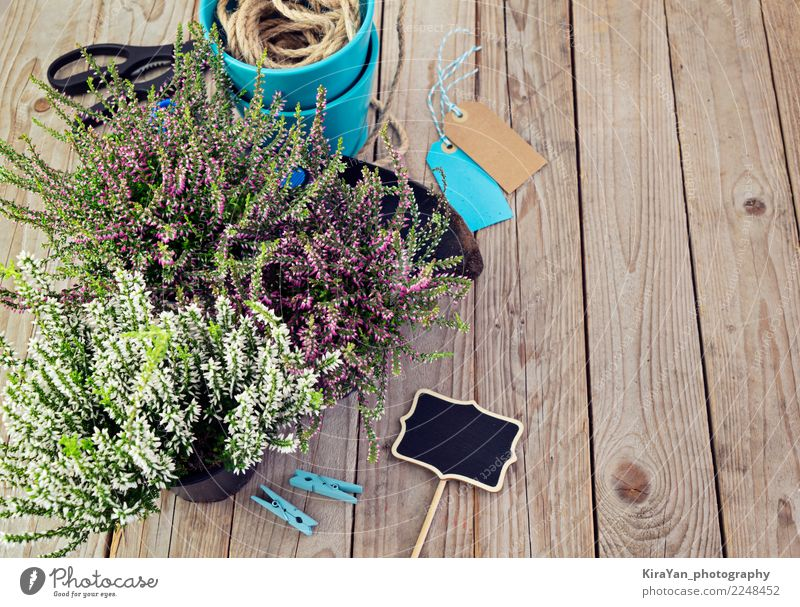 Frische Heide- und Gartengeräte. Vorbereitung für das Pflanzen. Topf Lifestyle Dekoration & Verzierung Tafel Gartenarbeit Werkzeug Schere Schaufel Herbst Blüte
