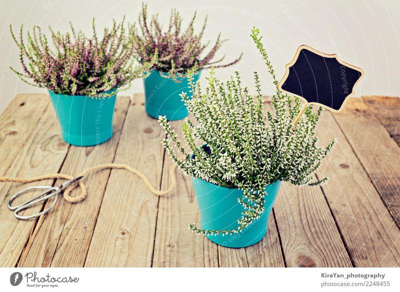 Drei Blumentöpfe mit blühendem Heidekraut Topf Design Garten Dekoration & Verzierung Gartenarbeit Arbeitsplatz Schere Frühling Herbst Pflanze Blüte Terrasse