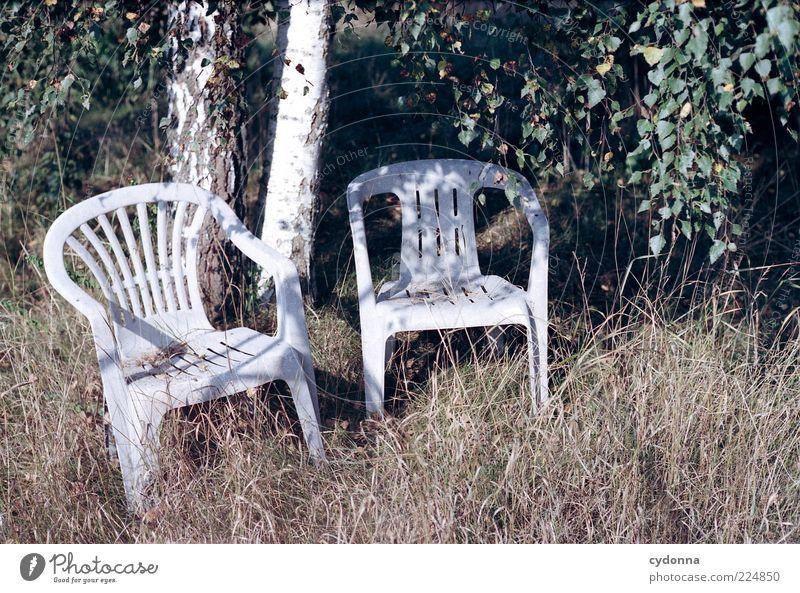 Sitzen gelassen Lifestyle Stil Design ruhig Umwelt Natur Sommer Baum Garten Wiese Einsamkeit einzigartig Langeweile Leben stagnierend träumen Vergänglichkeit